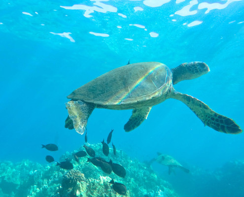 Turtle Rainbow Shell