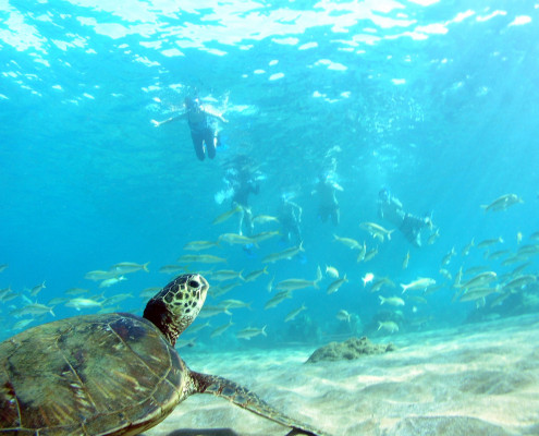 Turtle Fish Snorkel