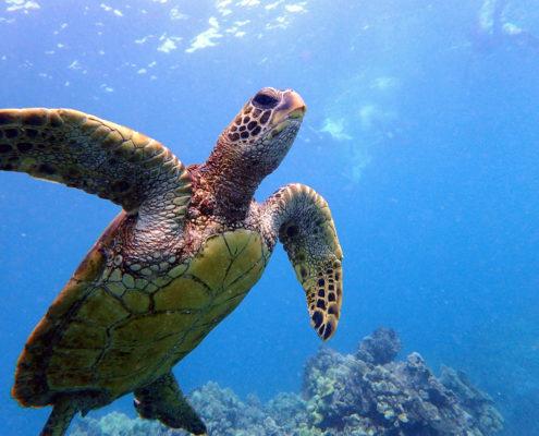 Turtle Town Makena